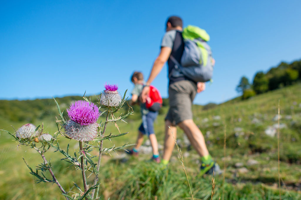 mountain-flowers-with-family-on-a-hike-V6MLTFK web